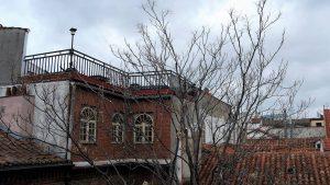 Reducción de copa de Ailanthus altissima